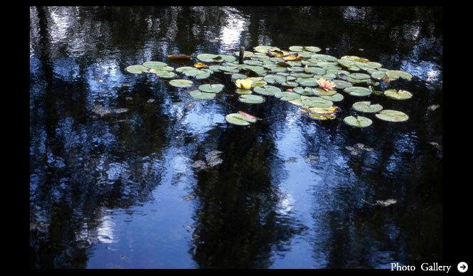 MATSUNAGA Manabu|Vol.6 クロード・モネ 睡蓮の庭