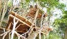 森の学校|C.W.ニコル 「Tree Dragon」はツリーハウスの第一人者、小林 崇さん制作