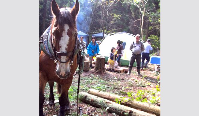 森の学校|C.W.ニコル 岩手からやってきたホースロギングの馬