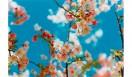 蜷川実花 Acid Bloom © Mika Ninagawa, Courtesy Tomio Koyama Gallery