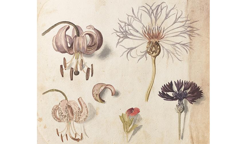 ART|植物画を愛でる「イングリッシュ・ガーデン」展が開催