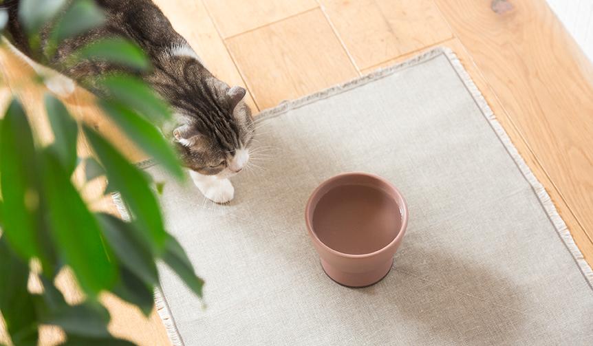RINN|大谷焼の猫用水飲み器「Cat Water Bowl」をリリース