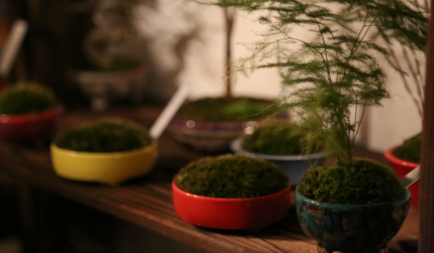 ART|盆栽の新たな魅力を追求するイベント「Deeply Love BONSAI」開催