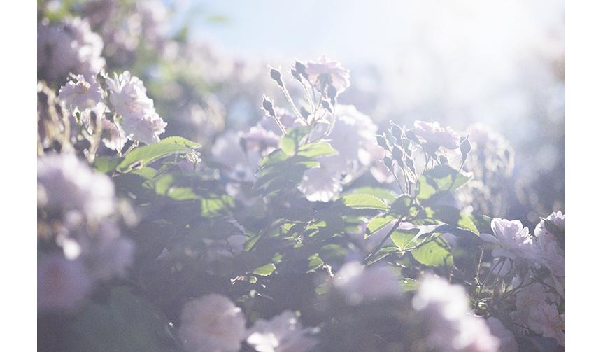 ART|愛する父の死に向き合う日々を撮影した「蜷川実花 うつくしい日々」