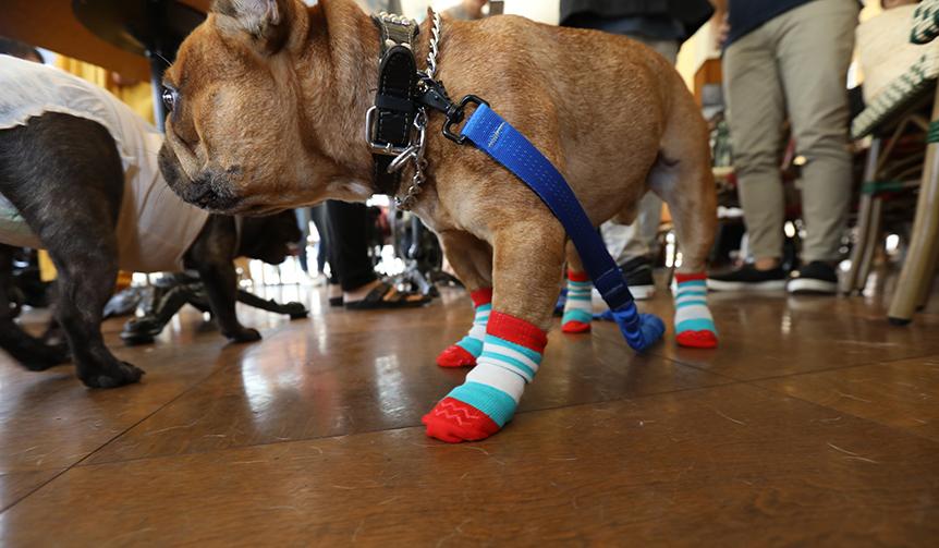 docdog|犬の靴・靴下専門店が開発した犬用靴下「Skitter」
