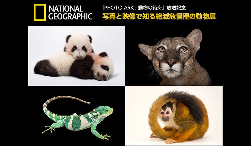 EVENT|二子玉川ライズにて「写真と映像で知る絶滅危惧種の動物展」開催中