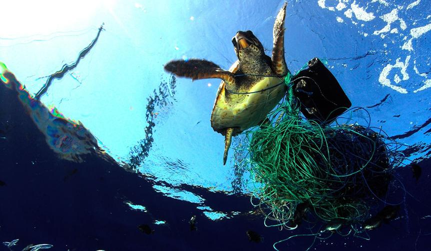 BREITLING|美しく豊かな海を維持するため、NGO団体とパートナーシップを締結