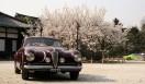 Best of Show(最優秀賞)…1951年アルファロメオ6C2500SSヴィラデステ