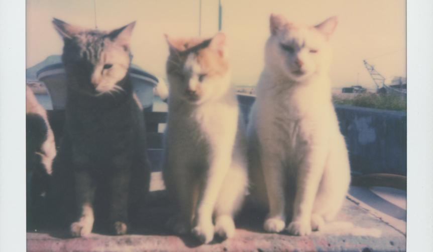 LOUNGE|路地裏で出会った猫を写した写真展が開催